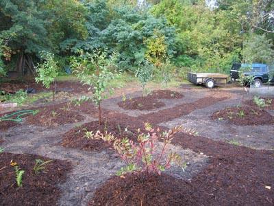 orchard-week-1frtrees400006.jpg