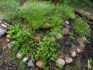 06-05-10_garden_herb-spiral-670