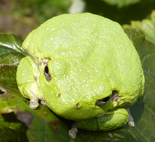 frog6002_2010-09-18_0292