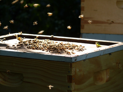 400_honey-extraction_0244
