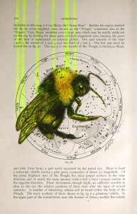 'Alchemist', pencil and acrylic on 1903 Astronomy Map (2013) by Louise McNaught