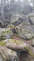 Upper Maxwell Falls Trail1350