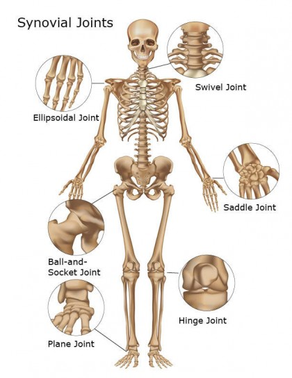 joints-of-body