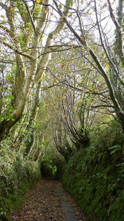 Wrinkleberry Lane, North Devon, England