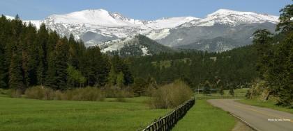 tall grass view