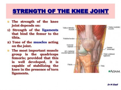 anatomy-of-the-knee-joint-33-638