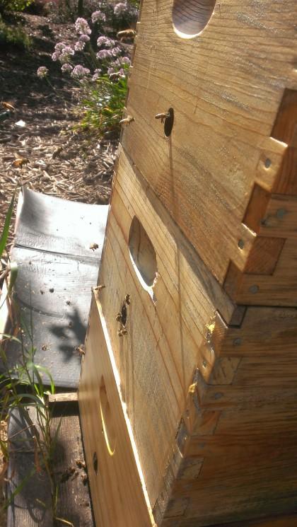 Artemis Hives