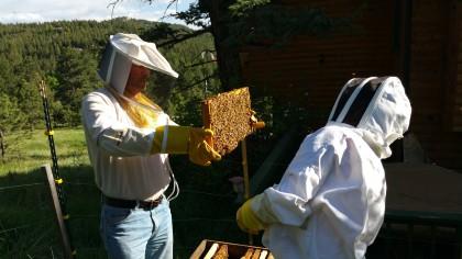 Tara, Arjan and bees