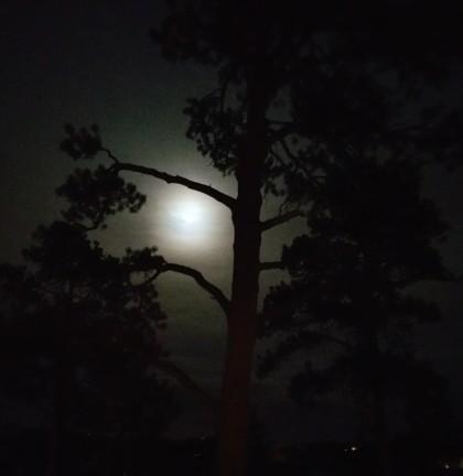 January moon at Beth Evergreen