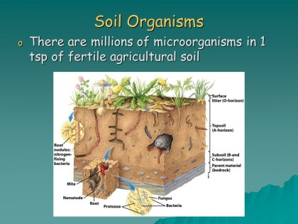 Soil Organisms There are millions of microorganisms in 1 tsp of fertile agricultural soil