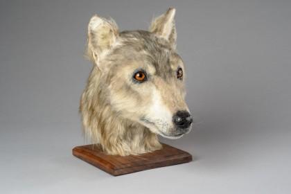 ancient scottish dog